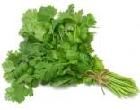 Koriandr setý Sada obsahuje 150 semen