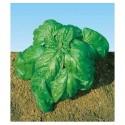 Bazalka Foglia Di Lattuga Balení obsahuje 200 semen