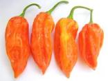 Chilli Jolokia Peach Sada obsahuje 10 semen