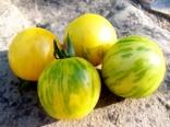 Rajče Topaz Sada obsahuje 10 semen