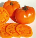 Rajče Valencia Balení obsahuje 10 semen