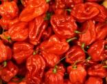 CHilli Scoth Bonnet Red  Balení obsahuje 10 semen