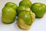 Tomatillo Verde Balení obsahuje 20 semen
