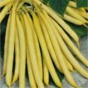 Fazol Směs barev Balení obsahuje 30 semen