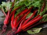 Mangold Rhubarb chard Balení obsahuje 100 semen