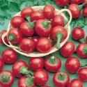 Chilli Cilegia picante satans kiss Balení obsahuje 10 semen