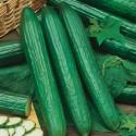 """Okurka salátová """"hadovka"""" Telegraph Balení obsahuje 30 semen"""