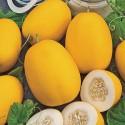 Meloun cukrový wine peach Balení obsahuje 10 semen