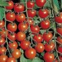 Rajče Chadwick's Cherry Balení obsahuje 10 semen