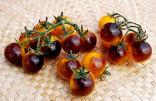 Rajče Blue Gold Berries Balení obsahuje 10 semen