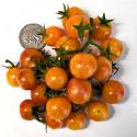 Rajče Bicolor Cherry Balení obsahuje 10 semen