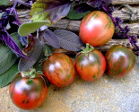 Rajče Vernissage Black Balení obsahuje 10 semen