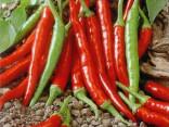 Chilli Damián Balení obsahuje 10 semen