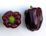 Paprika Chocolate Beauty – Čokoládová kráska Balení obsahuje 10 semen