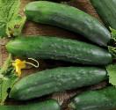 Okurka Mezzo Lungo Marketmore Balení obsahuje 30  semen