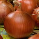 Cibule Morada de Amposta Balení obsahuje 500 semen