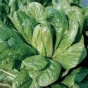 Salát Bionda Degli Ortolani Balení obsahuje 300 semen