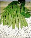 Fazol COCCO BIANCO Balení obsahuje 30 semen