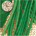 Fazol DOLICO DALL´OCCHIO VENETO NANO Balení obsahuje 30 semen