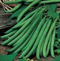 Fazol FERRARI NANO Balení obsahuje  30 semen