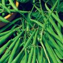 Fazol XERA NANO Balení obsahuje 30 semen