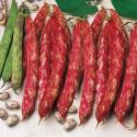 Fazol Borlotto Lingua di Fuoco Balení obsahuje 30 semen