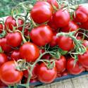 Rajče Tondino Maremmano Balení obsahuje 30 semen