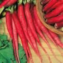 Ředkvička Candela Di Fuoco Balení obsahuje 400 semen