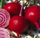 Červená řepa Tonda Di Chioggia Balení obsahuje 50 semen