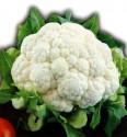 Květák Bianco Febrrarese Balení obsahuje 100 semen