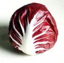 Čekanka salátová Palla Rossa  Balení obsahuje 50 semen