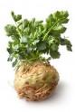Celer bulvový Maxim Balení obsahuje 200 semen