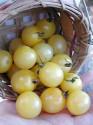 Rajče White Cherry  Balení obsahuje 10 semen