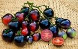 Rajče Indigo Rose  Balení obsahuje 10 semen