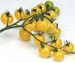 Rajče Snowberry Balení obsahuje 10 semen