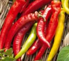 Paprika kozí roh Harriet Balení obsahuje 30 semen