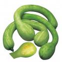 Tykev muškátová Trombetta D'Albenga Balení obsahuje 5 semen