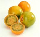 Solanum quitoense - Narančila    Balení obsahuje 5 semen