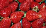 Jahodník Aromas Balení obsahuje 30 semen