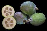 Acca sellowiana – Aka jedlá Balení obsahuje 10 semen