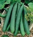 """♣ 1000 x semena Okurka salátová """"hadovka"""" Serpente Chinese """"Čínský had"""" Zvýhodněná nabídka"""