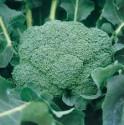 Brokolice Ramoso Calabrese Natalino Balení obsahuje 100 semen