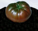 Rajče Black Krim Balení obsahuje 10 semen