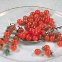 Rajče Currant Red  Balení obsahuje 10 semen