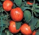 Rajče Elberta Peach Balení obsahuje 10 semen