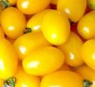 Rajče Gold Roma  Balení obsahuje 10 semen