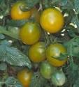 Rajče Green Grape Balení obsahuje 10 semen