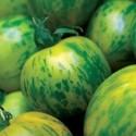 Rajče Green Zebra  Balení obsahuje 10 semen