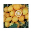 Rajče Lemon Plum  Balení obsahuje 10 semen