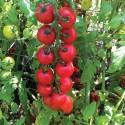 Rajče NectarAV Balení obsahuje 10 semen